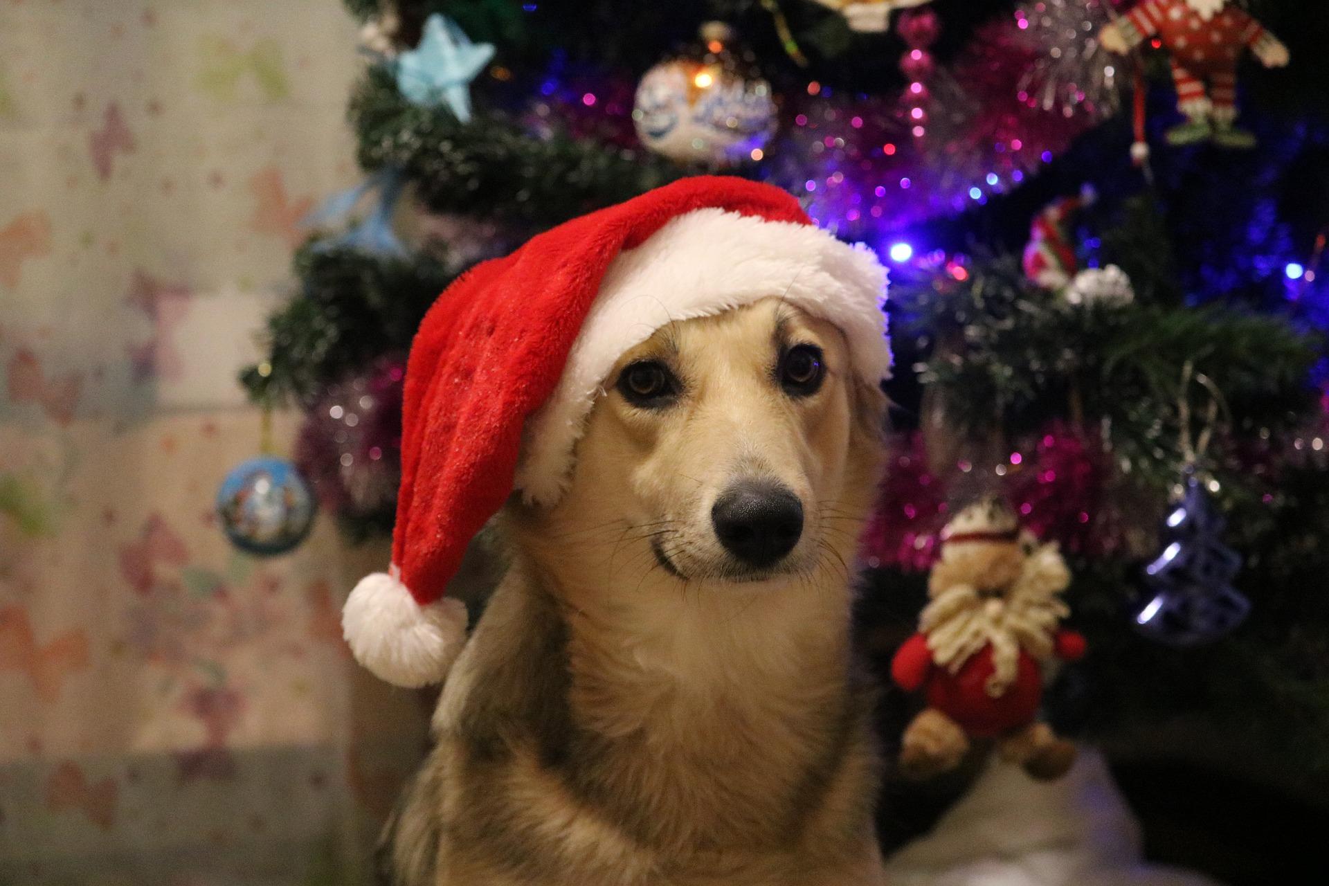 Weihnachen Hund